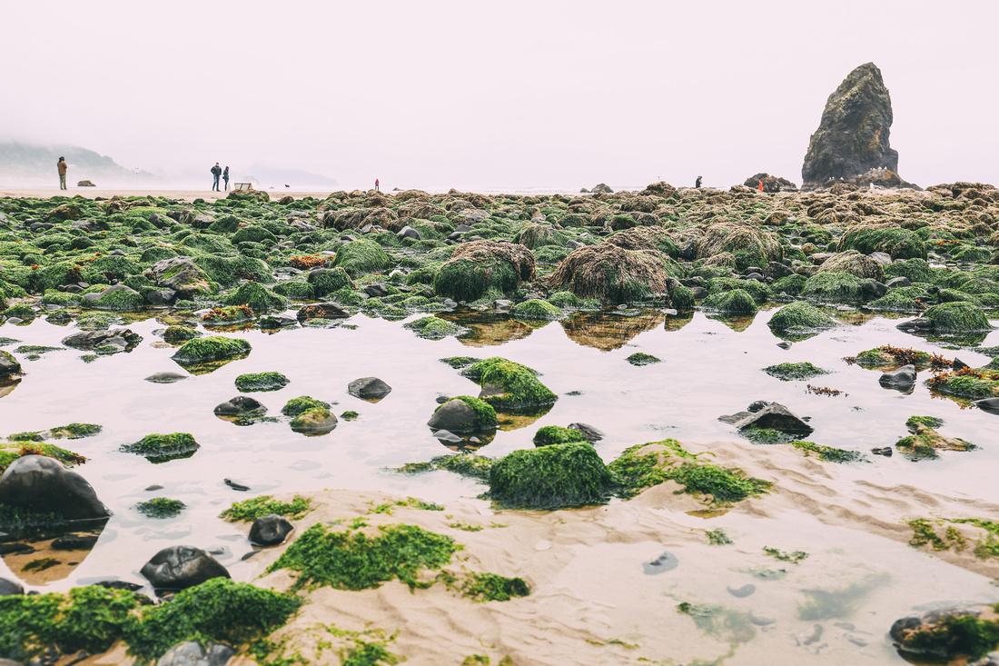 Haystack Rock, OR